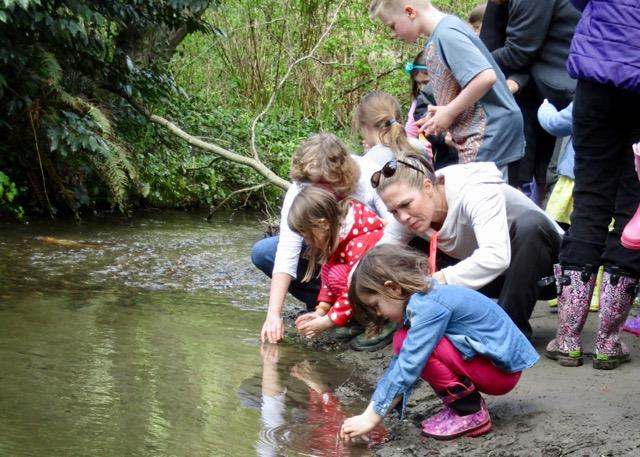 The Lake Forest Park Stewardship Foundation Helped LFP Students Release Salmon