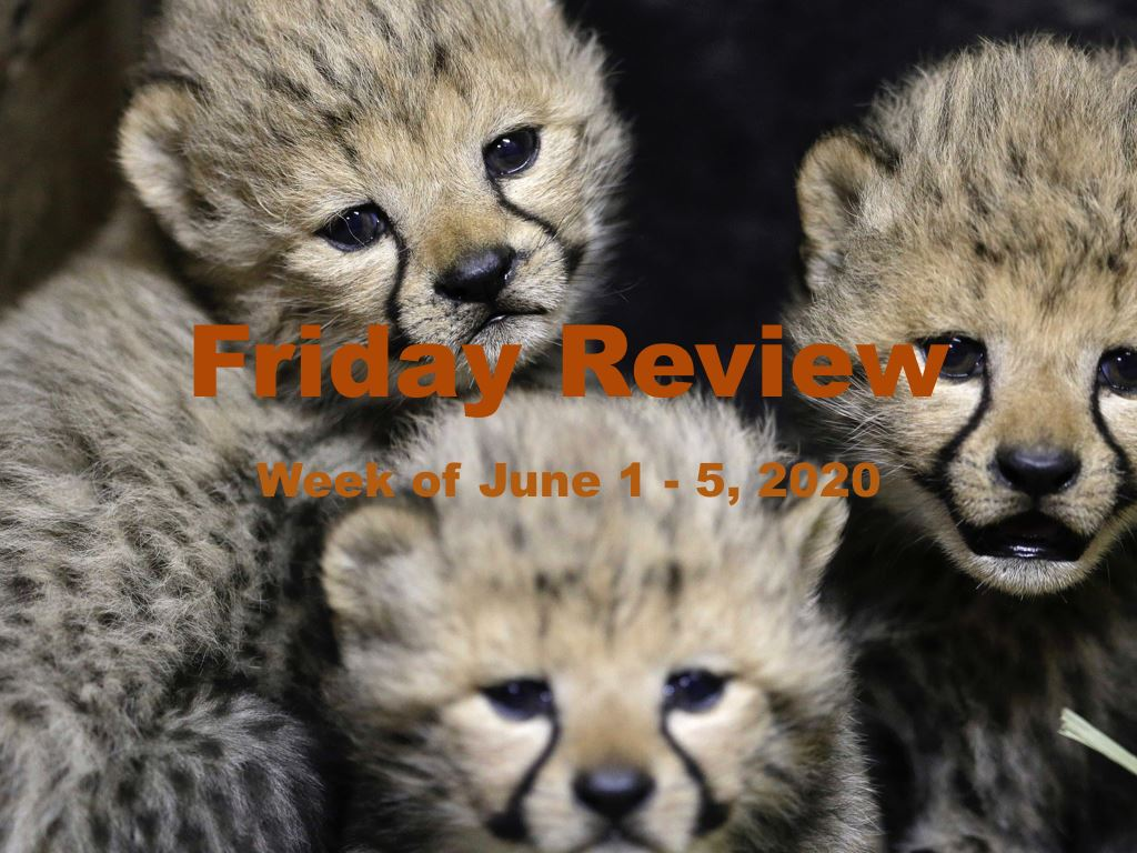 Friday Review for June 5, 2020